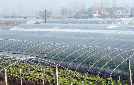 8月上旬农膜行业回温,业内心态将如何?